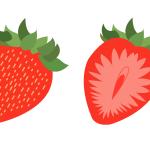 딸기 일러스트 이미지 디자인