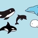 고래 일러스트 다운로드