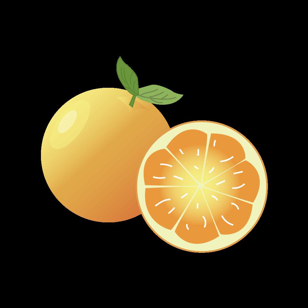 오렌지 PNG