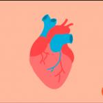 심장 일러스트 이미지 디자인