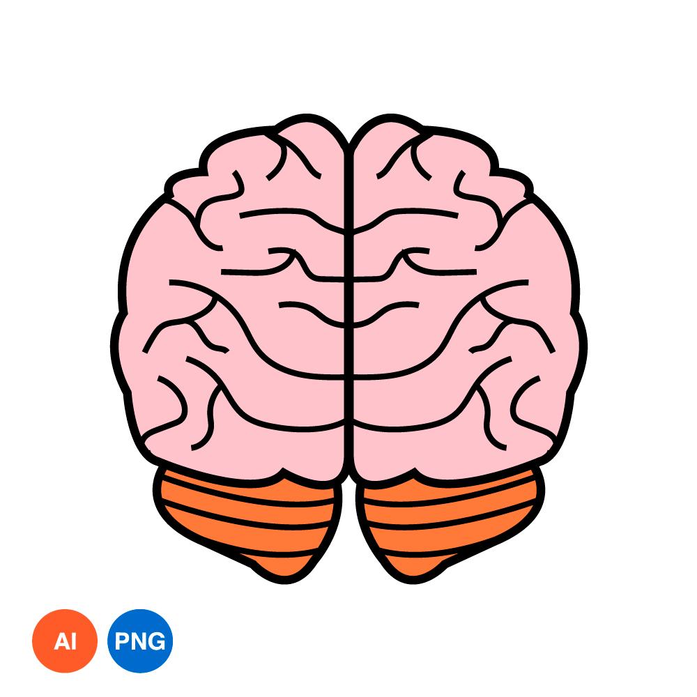 뇌 PNG