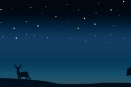밤하늘 디자인